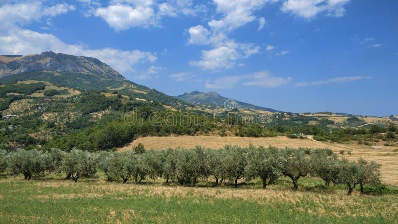 Paisagem do verão em Abruzzi perto de Brittoli fotos de stock