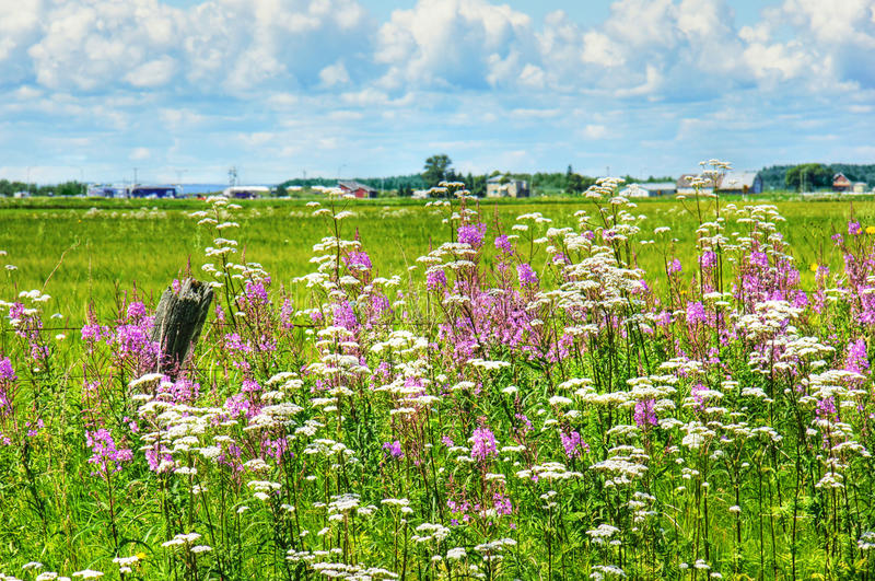 Paisagem Do Verão Em Canadá Rural Foto de Stock Royalty Free