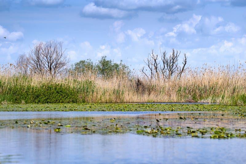Paisagem do verão no delta de Danúbio fotos de stock royalty free