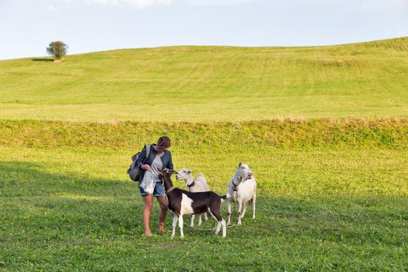 A paisagem do verão do pasto com mulher alimenta a pastagem de cabras fotos de stock