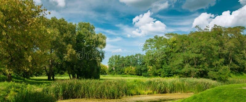 paisagem do verão, vista da costa de um rio pantanoso com vegetação luxúria sob um céu nebuloso bonito imagens de stock royalty free