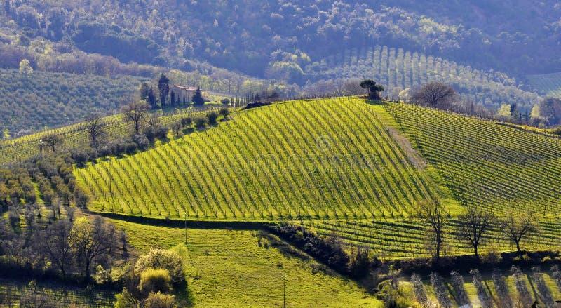 Paisagem do vinhedo em Italy fotografia de stock