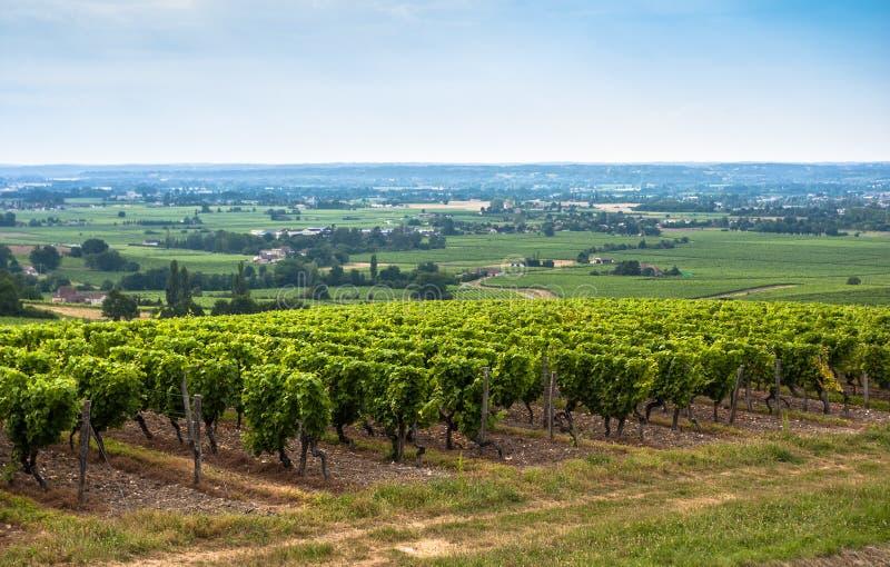 Paisagem do vinhedo perto do Bordéus, França imagem de stock