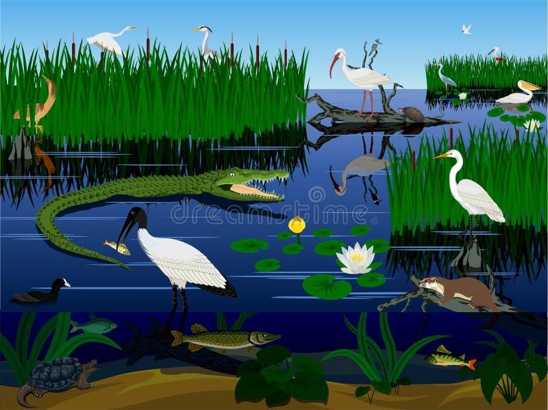 Paisagem dos marismas de Florida do pantanal do vetor com animais ilustração do vetor