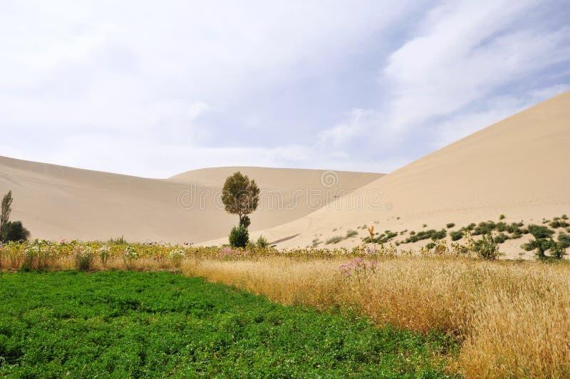 Paisagem dos oásis no deserto fotografia de stock