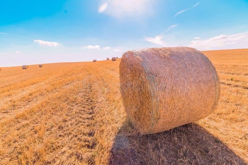 A paisagem dos pacotes de feno de campos de grama amarelos sob o céu azul com nuvens brancas, a agricultura e a natureza e relaxa foto de stock
