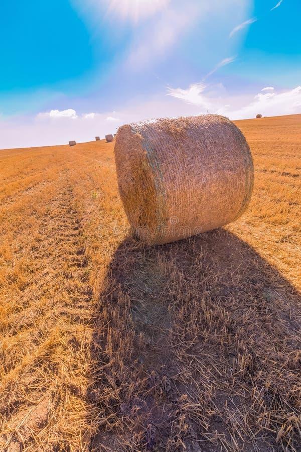 A paisagem dos pacotes de feno de campos de grama amarelos sob o céu azul com nuvens brancas, a agricultura e a natureza e relaxa imagem de stock