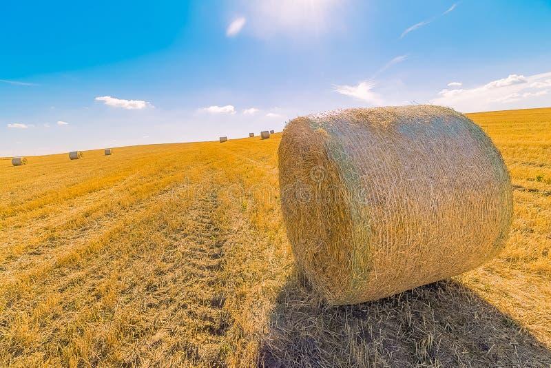 Paisagem dos pacotes de feno de campos de grama amarelos sob o céu azul com w fotografia de stock royalty free