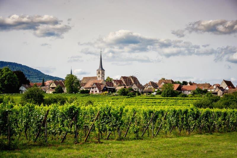 Paisagem dos vinhedos em Alsácia france imagens de stock