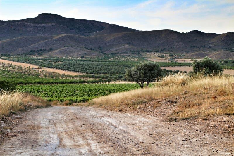 Paisagem dos vinhedos província em Jumilla, Múrcia foto de stock