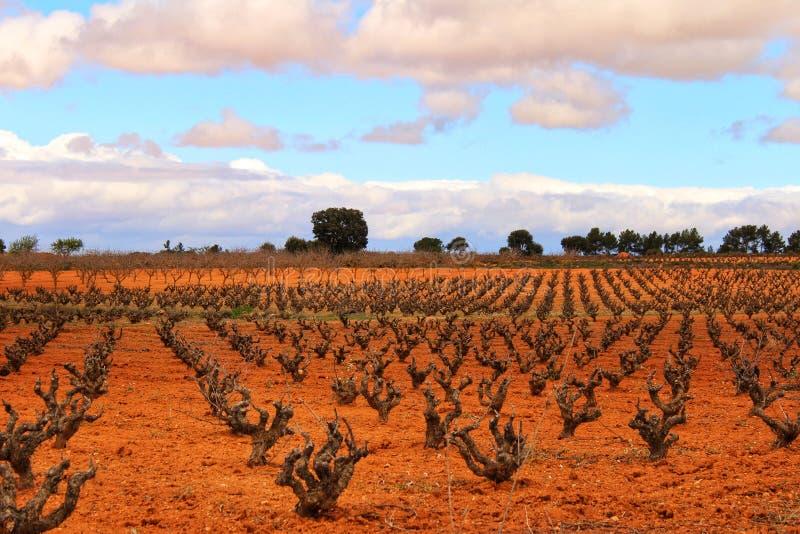 Paisagem dos vinhedos sob o céu cinzento no la Mancha de Castilla imagens de stock