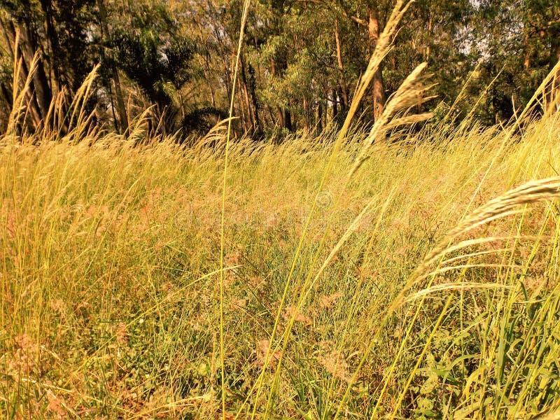 Paisagem du soleil d'horizon de nature naturel images libres de droits