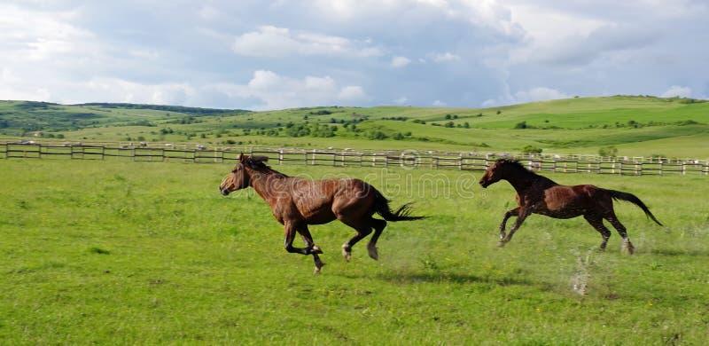 Paisagem e corrida dos cavalos fotografia de stock