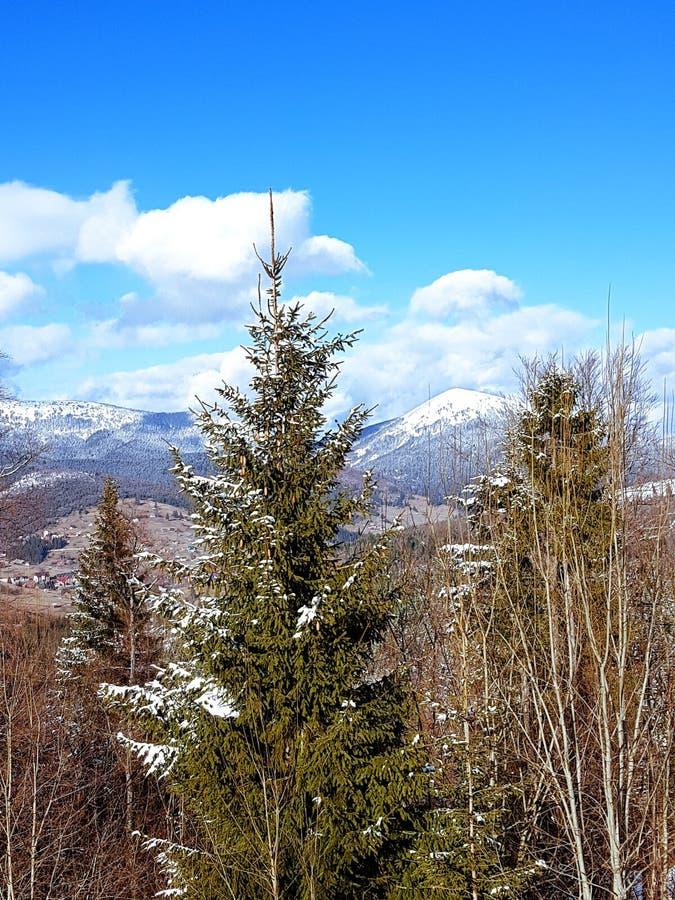 Paisagem em montanhas Carpathian, Ucrânia fotos de stock
