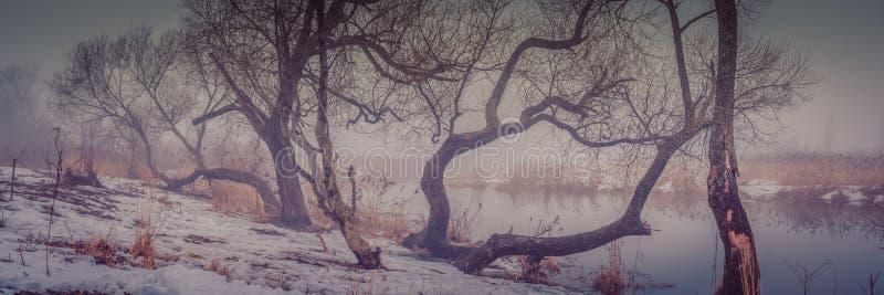 paisagem enevoada da inverno-mola vista panorâmica das árvores desencapadas na costa nevado do rio na perspectiva da névoa foto de stock