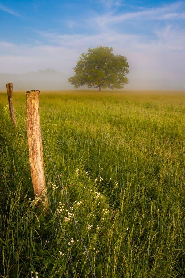 Paisagem enevoada da manhã da mola da angra de Cades do prado, das árvores e da cerca. foto de stock