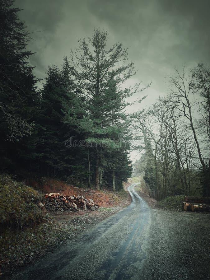 Paisagem enevoada e estrada secundária que perfuram o estilo retro do vintage da floresta, dia chuvoso frio nas madeiras foto de stock royalty free