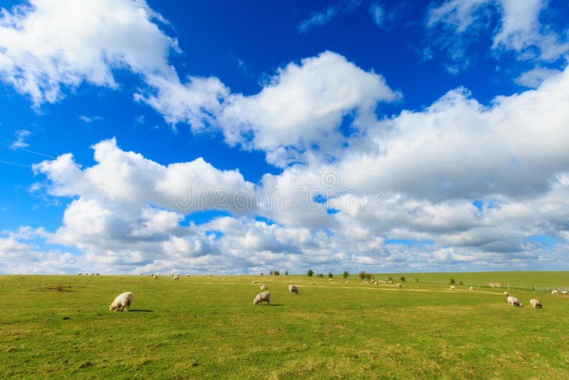 Paisagem ensolarada bonita Inglaterra de Stonehenge fotos de stock