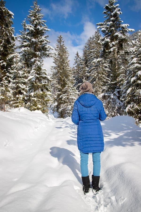 Paisagem ensolarada do inverno na natureza: Passeio, árvores nevados, luz do sol e céu azul imagens de stock