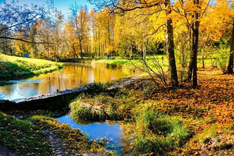 Paisagem ensolarada do outono bonito no parque de Pavlovsk com a represa velha no rio de Slavyanka e nas árvores com vermelho e o imagem de stock royalty free