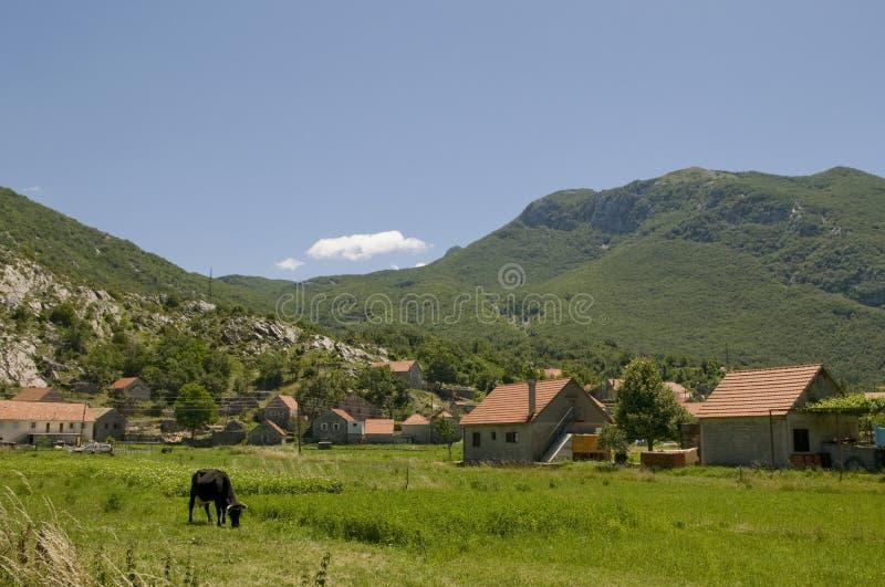 Paisagem ensolarada do verão com vaca imagem de stock royalty free