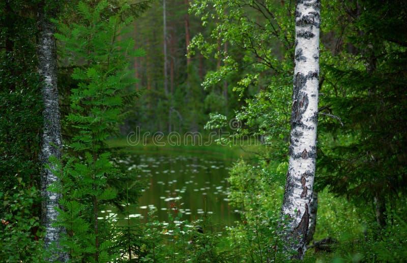 Paisagem escandinava da floresta imagens de stock