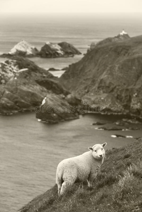 Paisagem escocesa do litoral com carneiros shetland scotland foto de stock royalty free