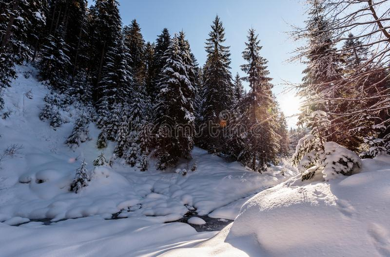 Paisagem fant?stica da floresta do inverno Glowin nevado gelado dos abeto na luz solar Conceito do feriado de inverno dia feliz d imagem de stock