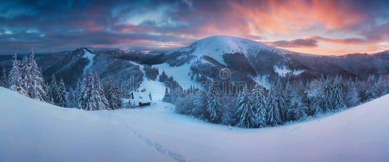 Paisagem fantástica do inverno da noite e da manhã Céu nublado colorido Árvore coberto de neve mágica do mundo da beleza Árvore d imagem de stock
