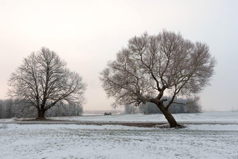 Paisagem fria da manhã do inverno com uma estrada e uma árvore só foto de stock