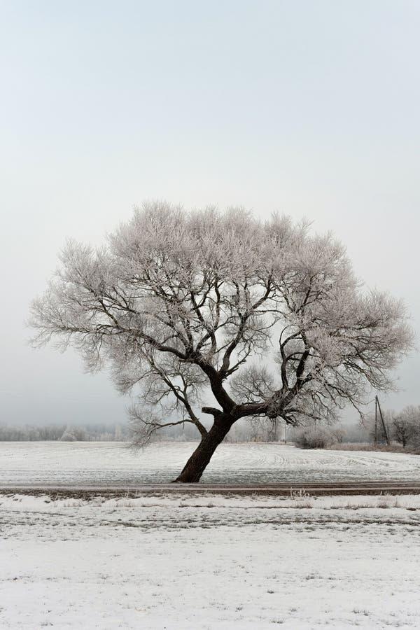 Paisagem fria da manhã do inverno com uma estrada e uma árvore só fotografia de stock