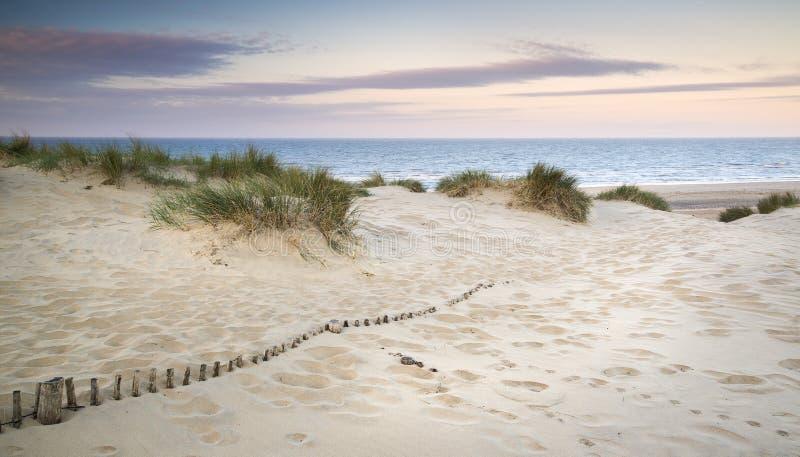 Paisagem gramínea das dunas de areia no nascer do sol imagem de stock