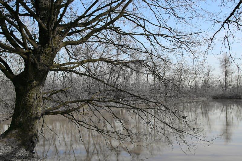 Paisagem grande do inverno do carvalho perto do lago imagens de stock royalty free