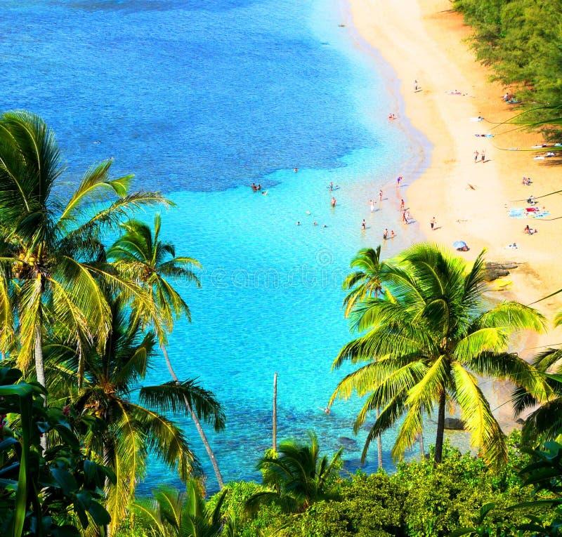 Paisagem havaiana foto de stock