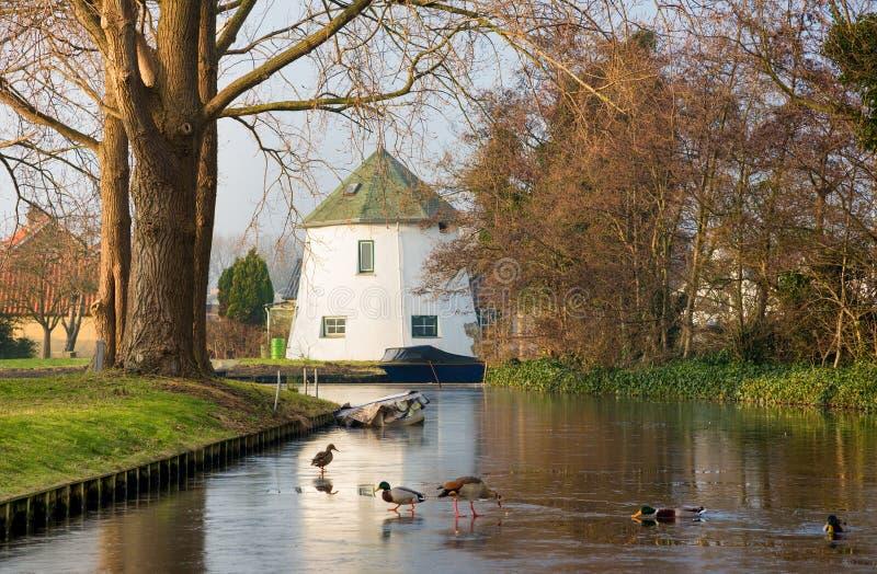 A paisagem holandesa do mola-inverno-outono provincial com canal gelo-coberto, o barco azul, a casa branca e a alimentação ducks foto de stock royalty free