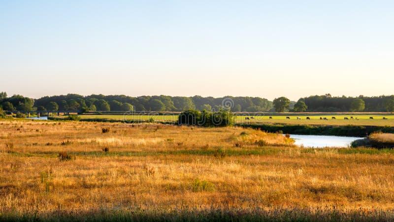 Paisagem holandesa do por do sol do vale do rio Vecht imagem de stock