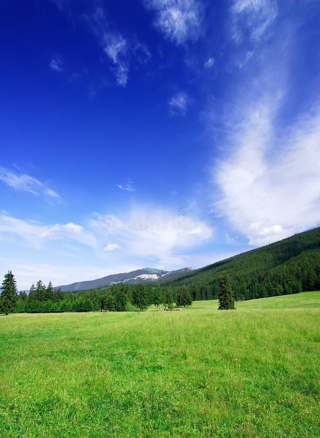 Paisagem idílico, ideia de campos verdes e céu azul fotos de stock royalty free