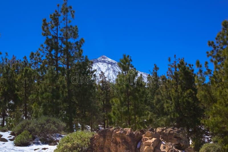 Paisagem, ideia do pico de montanha neve-tampado através dos ramos verdes das árvores, céu brilhante imagens de stock royalty free