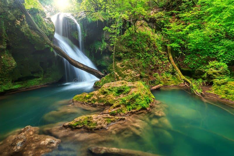 Paisagem impressionante na floresta profunda com cachoeira surpreendente, Romênia fotos de stock
