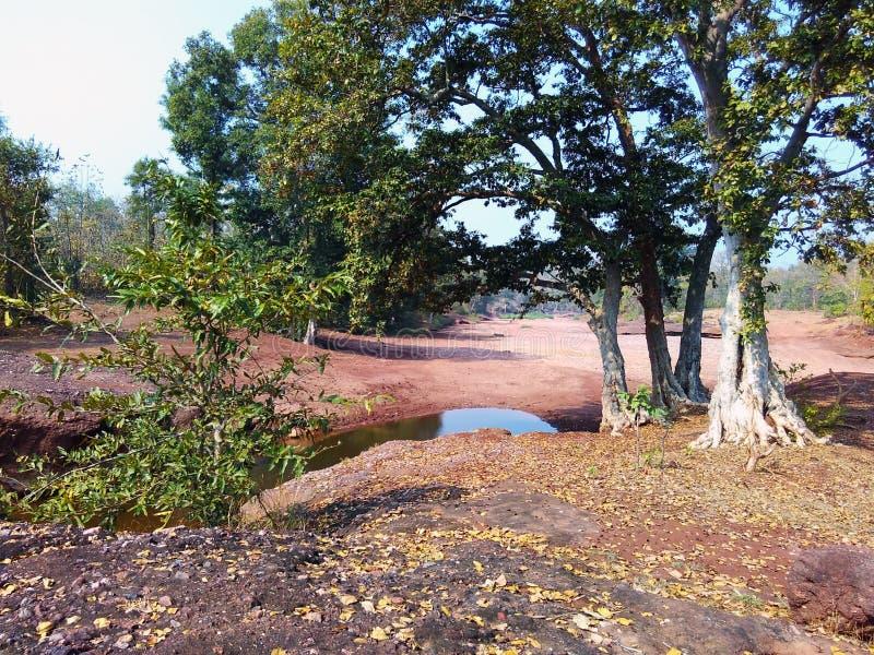 Paisagem india da floresta de Satpura fotos de stock