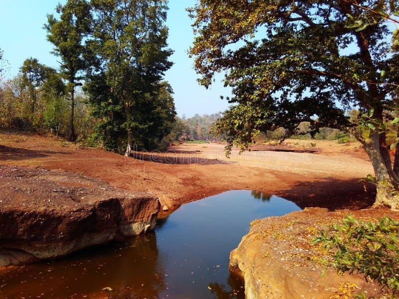 Paisagem india da floresta de Satpura imagens de stock