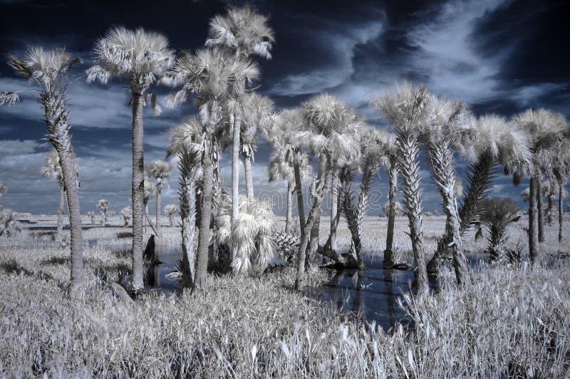 Paisagem infravermelha do pantanal fotos de stock