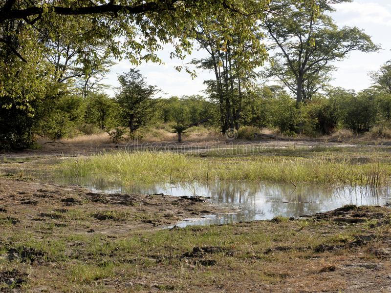 Paisagem inundada, no parque nacional de Moremi, Botswana fotos de stock