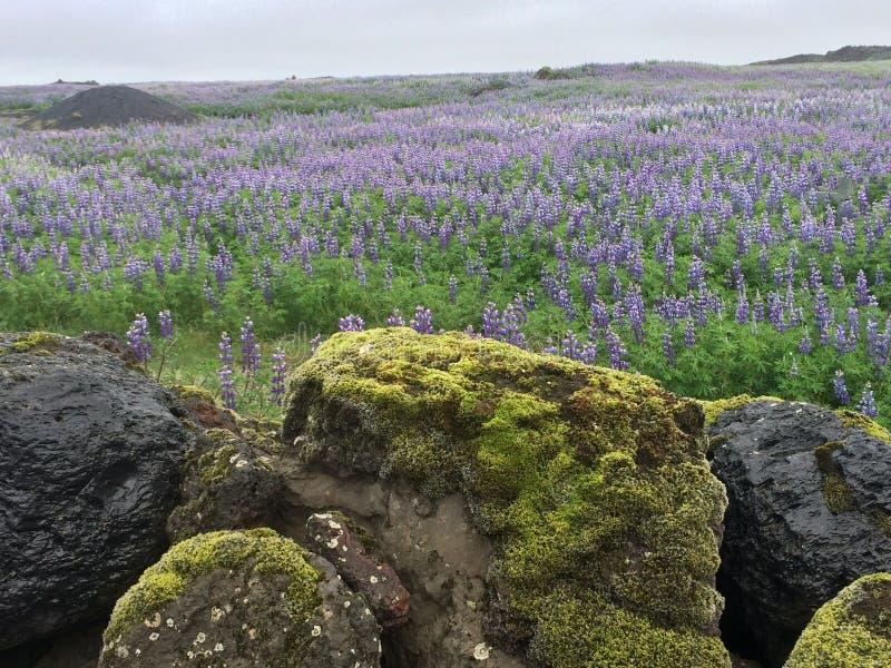 Paisagem islandêsa imagens de stock