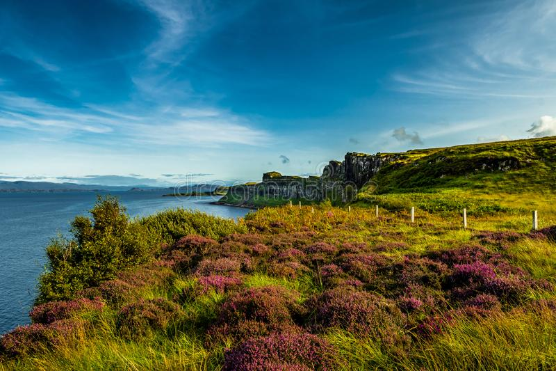 Paisagem litoral com Heather Near Kilt Rock On a ilha de Skye In Scotland fotografia de stock