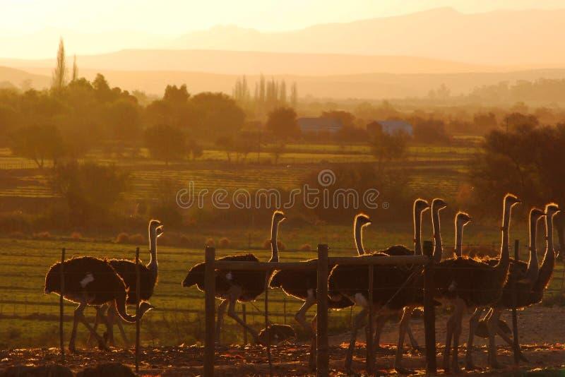Paisagem macia do Karoo foto de stock royalty free
