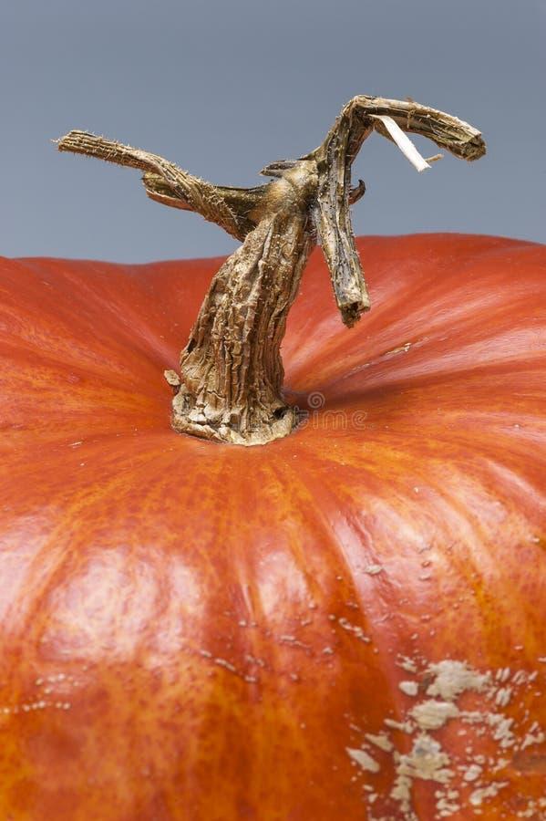 Paisagem macro, haste com estranhamente forma da árvore, pele, abóbora, o fotos de stock royalty free