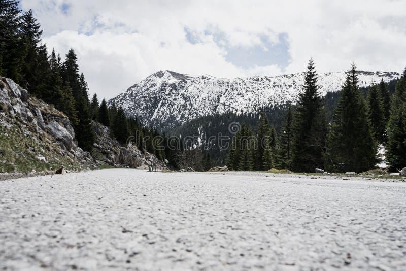 Paisagem magnífica com a montanha rochosa da estrada asfaltada Floresta no pico da neve de Montenegro imagens de stock