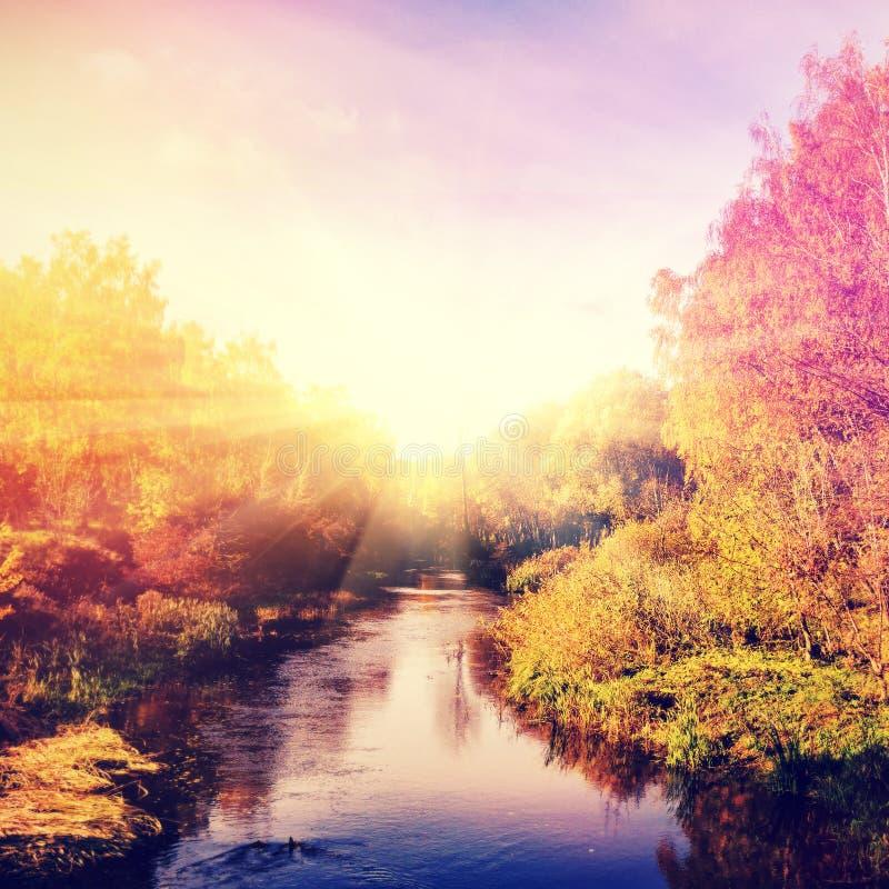 Paisagem maravilhosa com as árvores do outono na floresta, sobre o rio imagem de stock royalty free
