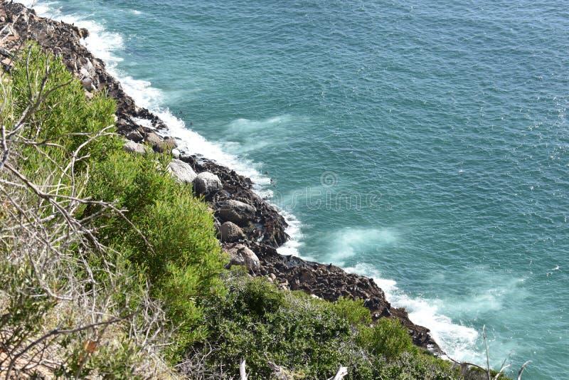 Paisagem maravilhosa com muitos selos na fuga de caminhada na reserva natural de Robberg na baía de Plettenberg, África do Sul imagem de stock royalty free